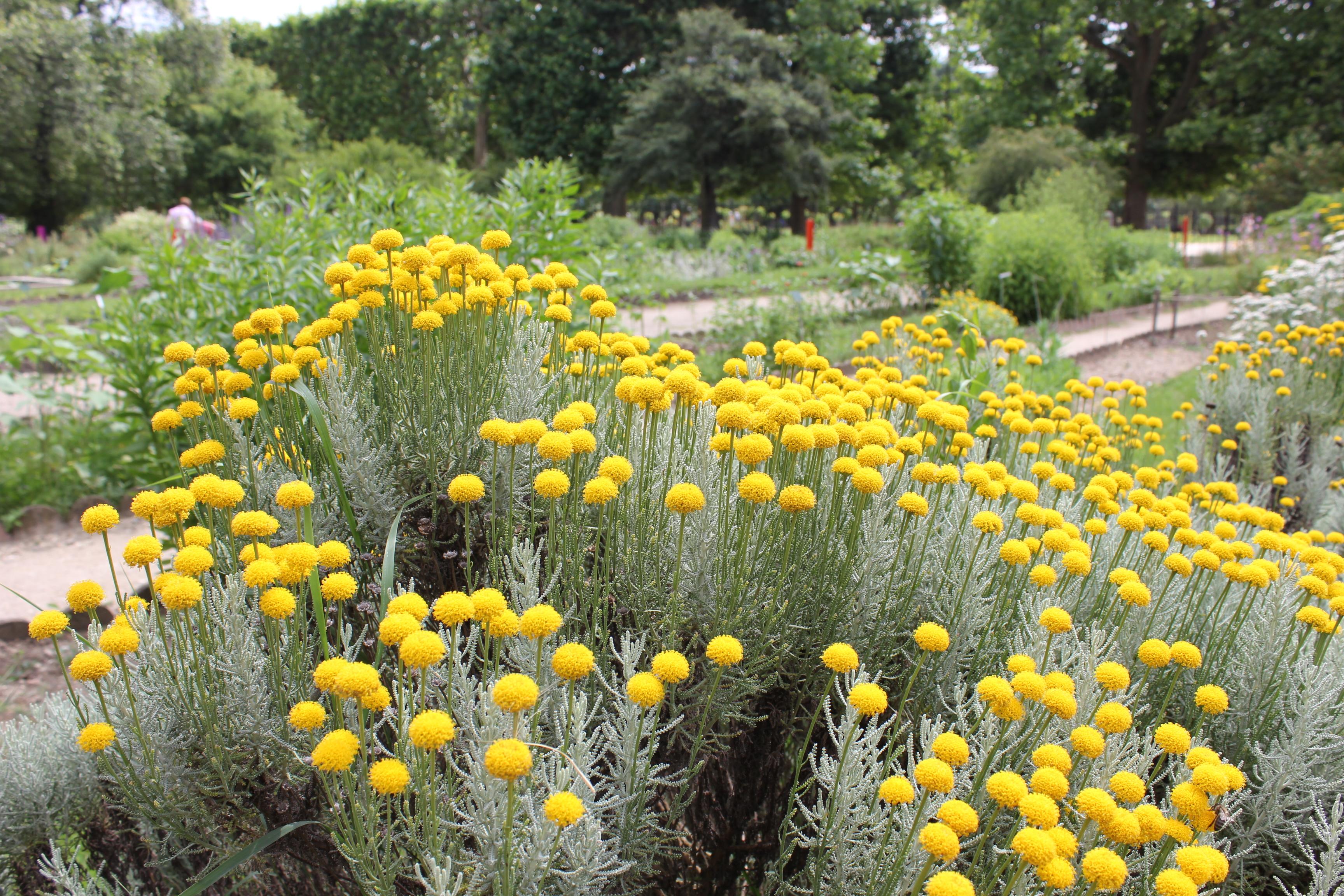 Rue moufettard jardin des plantes bilbyandbear - Zoo jardin des plantes ...